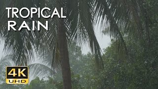 4K Tropical Rain Sounds & Relaxing Nature Video - Sleep/ Relax/ Study/ Meditate - Ultra HD