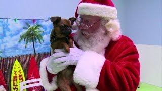 Dogs get their own Christmas party in Los Angeles