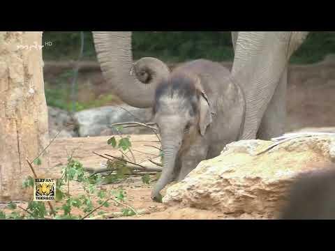 Treffen der Elefanten-Bullen