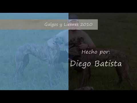 Galgos y Liebres 2010 Parte 6