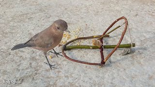 How To Make A Bird Trap Out Of Sticks Works 100% - Simple Bird Trap 🐦