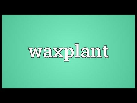 Header of waxplant