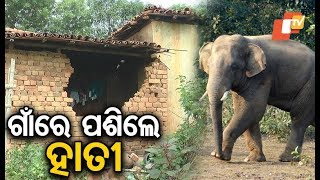 Elderly woman killed, houses & crops damaged in elephant attack