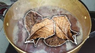 Nấu nước cốt lá Bàng để nuôi cá hiệu quả | Terminalia catappa