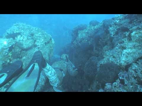 inblue wetsuits, spearfishing