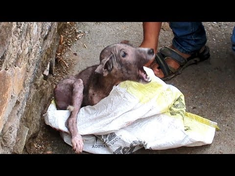 Terrified & in pain, puppy's amazing transformation after rescue