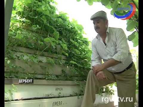 Продам 10 соток в п элита, земельные участки в красноярске, id объекта - 201308259 - фото 1