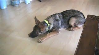 6 Dog Training Secrets in 5 Minutes!