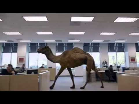 Misc Television - Geico Commercial