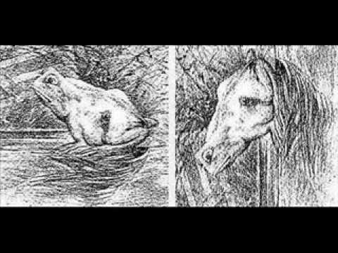 Frog Horse Drawing Illusion Horse And Frog