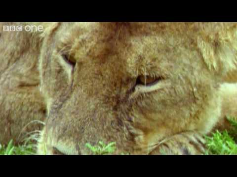 Funny Talking Animals - Walk On The Wild Side - Episode Five Preview - BBC One