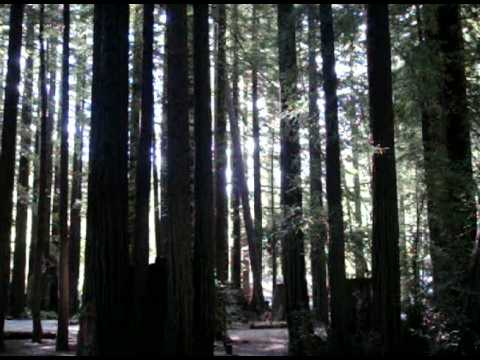 KiD Adventures Watches Falling Tree in Humboldt Redwood State Park