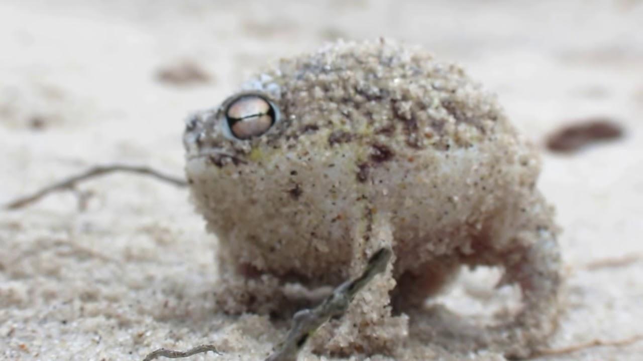 Worlds Cutest Frog - D...