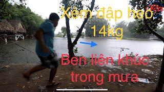 FISHING| XÉM ĐẬP HEO CÁ TRA GẦN 14KG | CÂU CÁ HỒ HAI QUYỀN (23/5/19)| CÁM NGHIA N1 BÃO TRONG MƯA