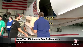 Louisiana shelter animals take flight