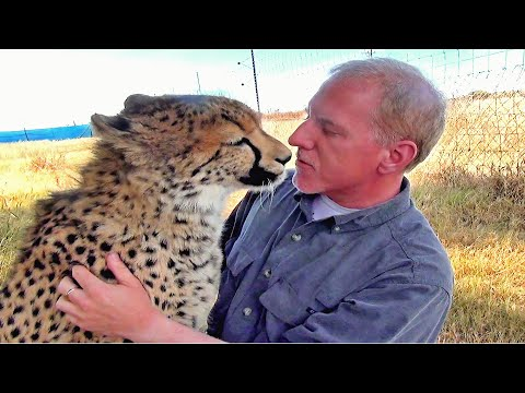 Man Reunites With African Cheetah Cat After 1 Year Absence -  Do You Remember Me?  A Documentary