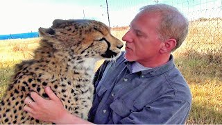 Man Reunites With African Cheetah BIG Cat After 1 Year Absence -  Do You Remember Me?  A Documentary