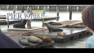 Speech of the Sea Lion
