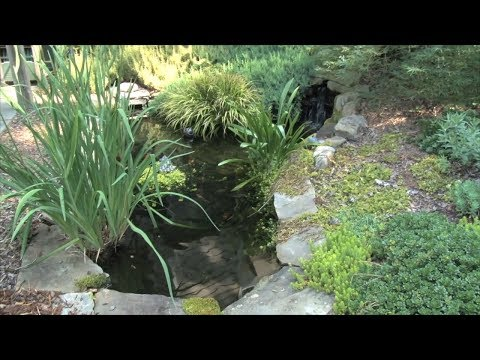 Ranger Nick: Installing & Maintaining Small Landscape Ponds