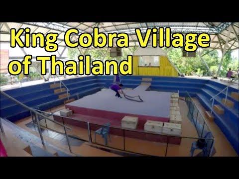 King Cobra Village of Thailand