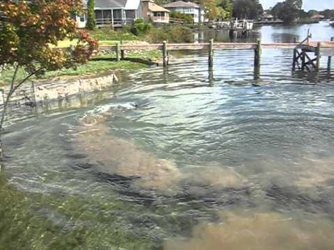 Dolphins team fishing crystal river fl youtube for Crystal river fl fishing