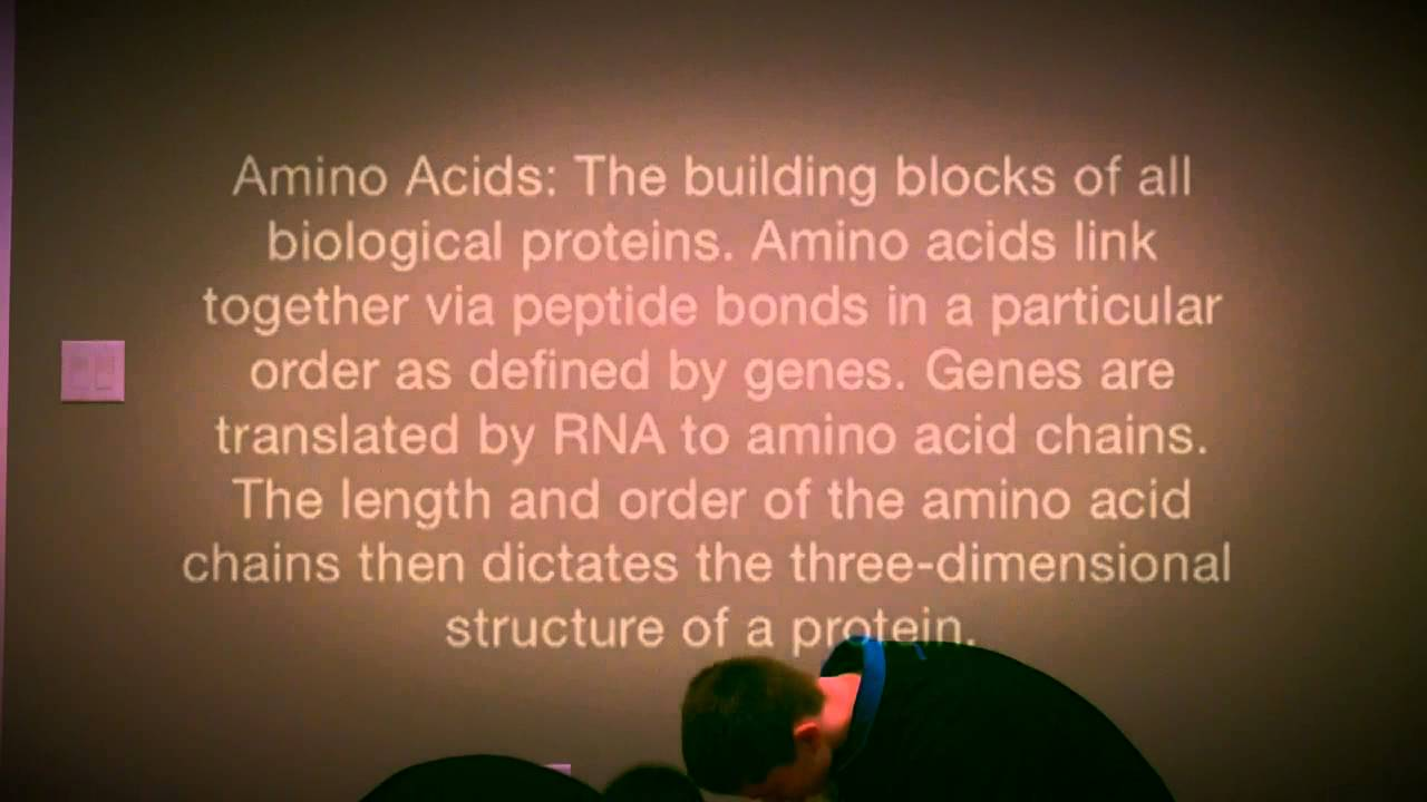 protein sythesis Home » protein synthesis definition noun, plural: syntheses the creation of proteins by cells that uses dna, rna and various enzymes supplement protein.