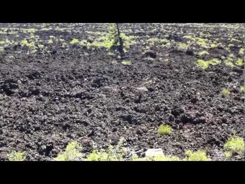 Lava Fields on Lava Cast Forest Trail Video