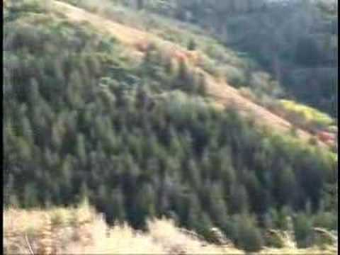 830 Yards Elk Hunting - Long Range Shooting Video