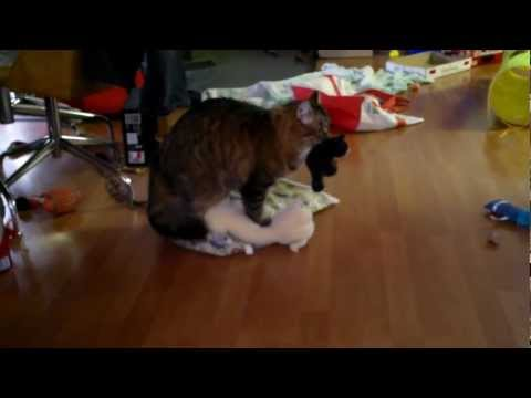 Cat Has Sex With Dog Crazy Climax video