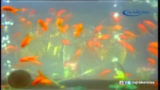 Paavai Oru Medai Song HD | Paaru Paaru Pattanam Paaru