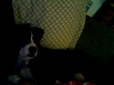 My Dog Snores video