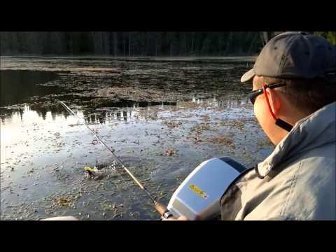 видео рыбалка на нахлыст