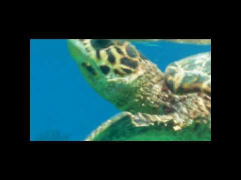 Snorkeling in Maldives - Sea Turtle 1