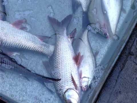 Fish Market of Calcutta