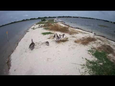 South Carolina Coastal Conservation League Live PELICAM from Charleston Harbor