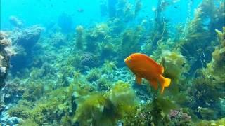 California Diving, Two Harbors, Catalina Island,  Sep 22 2012