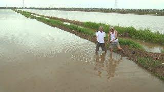 Tập trung các giải pháp bảo vệ, khôi phục diện tích lúa sau bão