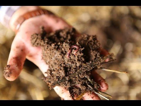 Выращивание черви 57