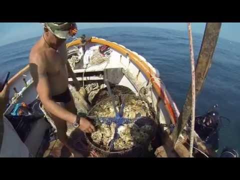 ловля на морские мидии