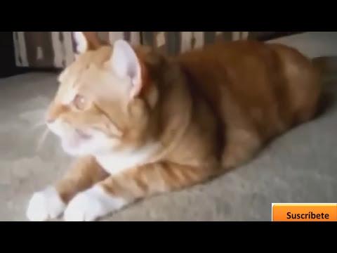 Videos graciosos 2014 - Videos de risa de animales chistosos - Perros, gatos y mas!