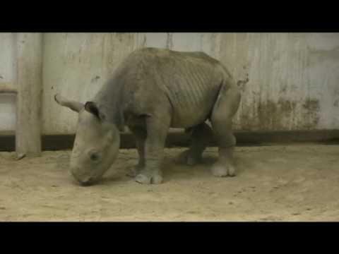 Black Rhino Born at Cleveland Metroparks Zoo