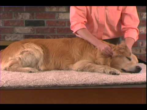 Small Animal Massage Demonstration