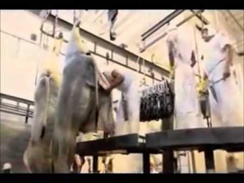 CNTA Afins em defesa dos trabalhadores de frigoríficos