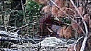 Baby Bigfoot Sighting in Massachusetts, Breakdown