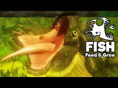 feed and grow fish gameplay german riesen schildkröte
