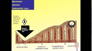 Magdy Said Anatomy Series,General Embryology,6- Menstrual Cycle