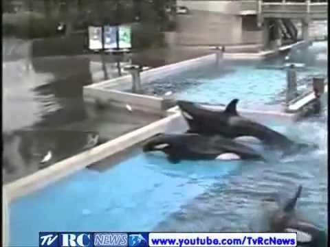 Baleia mata treinadora video completo - 1947259 Views.flv