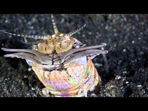 Fishing report - EUNICE APHRODITOIS  29.1.2012 Video