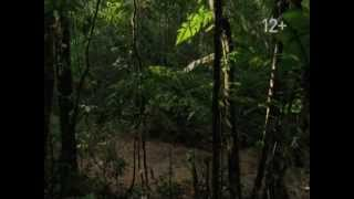 National Geographic Channel Promo Video №4