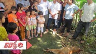 Chó dại cắn nhiều người, một thai phụ tử vong | VTC